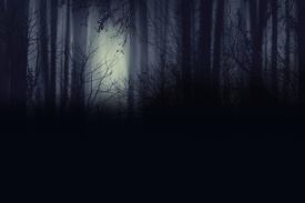 Spooky foggy forest at night wallpaper Creatie Abstract Background.